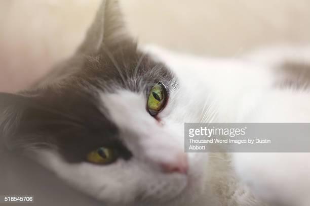 feline eharmony profile - dustin abbott imagens e fotografias de stock