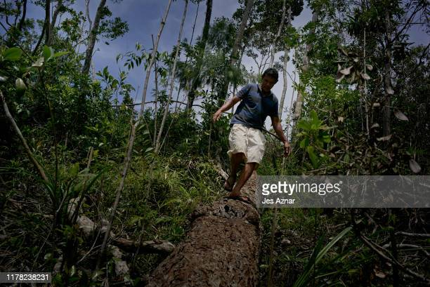 Felipe Ilustresimo 51 a para enforcer for the PNNI inspects a log that was cut down by illegal loggers on October 17 2019 in Narra Palawan...