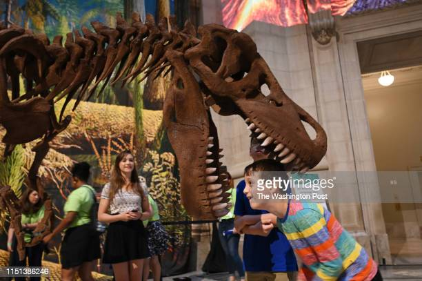 Felix Torres of New York takes a closer look inside the jaws of Tyrannosaurus Rex Mr Bones before the official opening of Fossil Hall at The National...