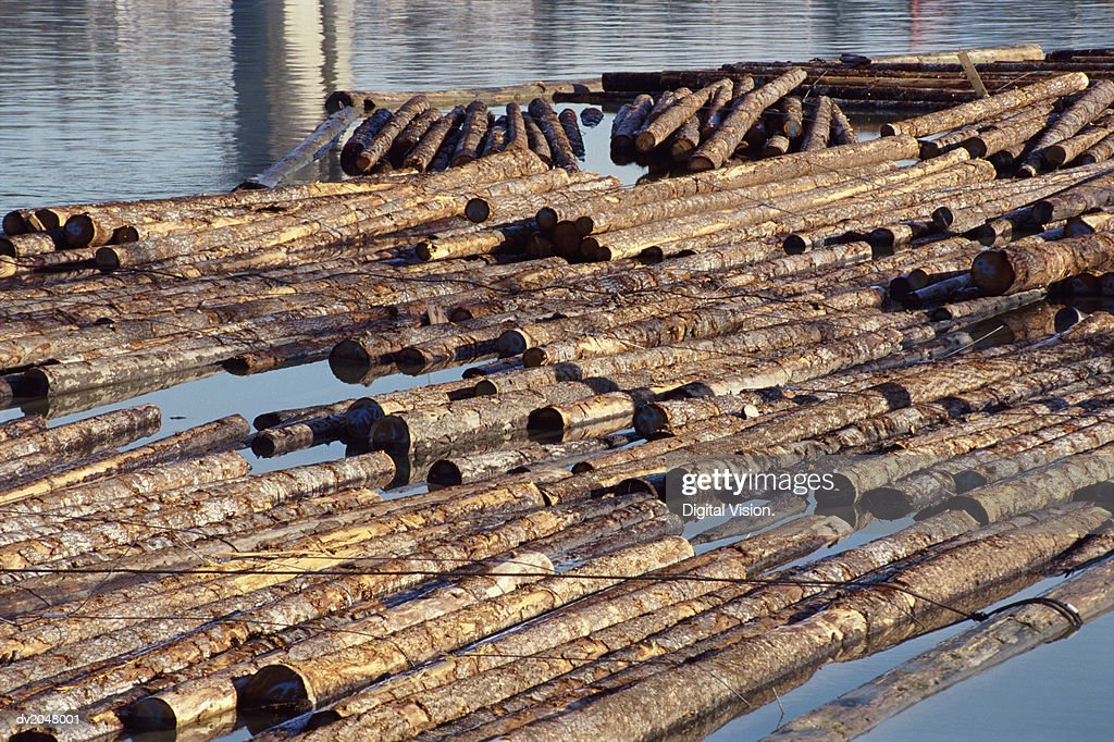 Felled Logs Floating on the Water : Stock Photo