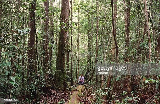 A felled tree provides the only path through lowland dipterocarp rainforest Central Kalimantan Borneo Indonesia