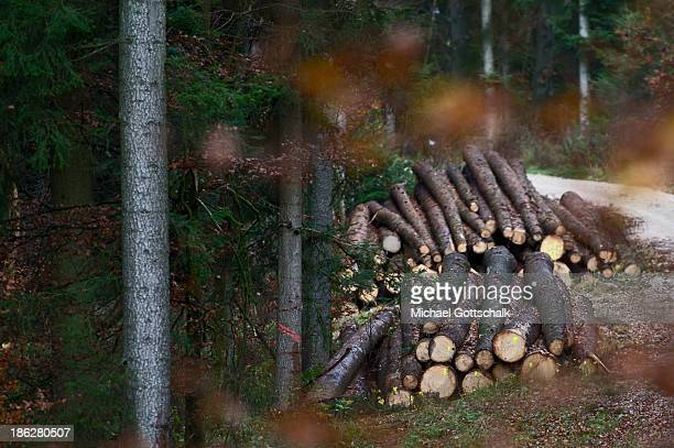 Felled tree trunks in a mixed Forest next to a Path on October 29 2013 in Markt Beratzhausen Germany