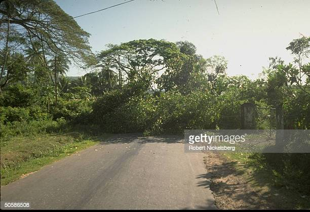 Felled trees blocking road in example of Sinhalese JVP rebel attempts to foil pres election voting in S where People's Liberation Front prevails