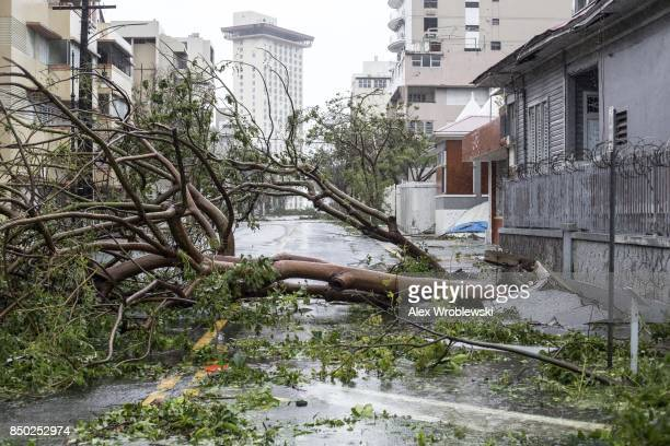 Felled trees cover the roads in the Miramar neighborhood after Hurricane Maria made landfall on September 20 2017 in San Juan Puerto Rico Thousands...