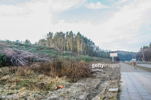 Felled trees lie on private property near the Tricity Landscape Park on 1 March 2017 in Gdansk Poland Massive uncontrolled trees cutting is occurring...