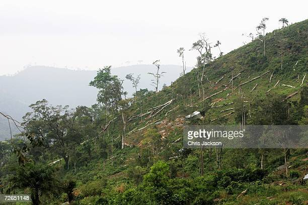 Felled trees lie on the mountainside just outside Freetown on November 27 2006 in Freetown Sierra Leone Deforestation has become a huge problem in...