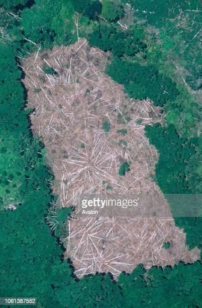 Felled Tress prior to Burning to create growing area for manioc Near Manaus Brazilian Amazon