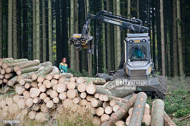Feller buncher in forest