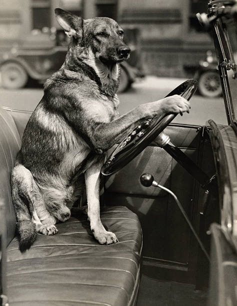 UNS: Dogs and Their Cars