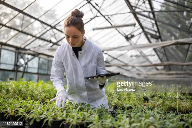 female agricultural engineer working in a greenhouse - laborkittel stock-fotos und bilder