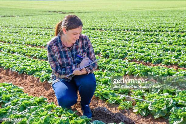 female agronomist working at cabbage farm - agronomist stock pictures, royalty-free photos & images