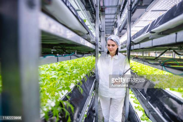 female ag-tech researcher imagining a self-sufficient future - caucasian appearance stock pictures, royalty-free photos & images