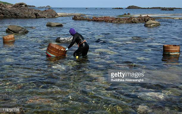 A female Ama diver catches sea urchins at Fukura Beach on July 24 2011 in Fukui Japan In Fukui prefecture sea urchin fishing is allowed only during...