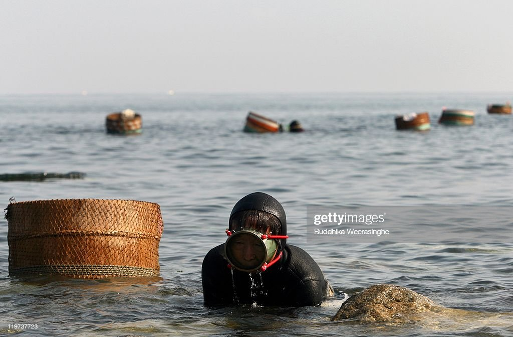 Sea Urchin Fishing Season Starts In Fukui : News Photo