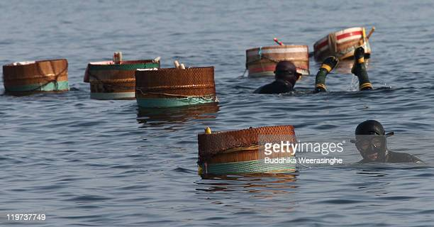 Female Ama divers catch sea urchins at Fukura Beach on July 24, 2011 in Fukui, Japan. In Fukui prefecture, sea urchin fishing is allowed only during...