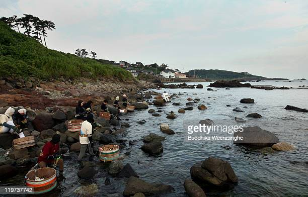 Female Ama divers prepare on the shoreline to catch the sea urchins at Fukura Beach on July 24, 2011 in Fukui, Japan. In Fukui prefecture, sea urchin...