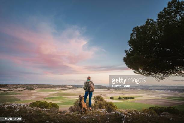 female and a dog looking at the landscape at sunset during a hike - camino de santiago stock pictures, royalty-free photos & images