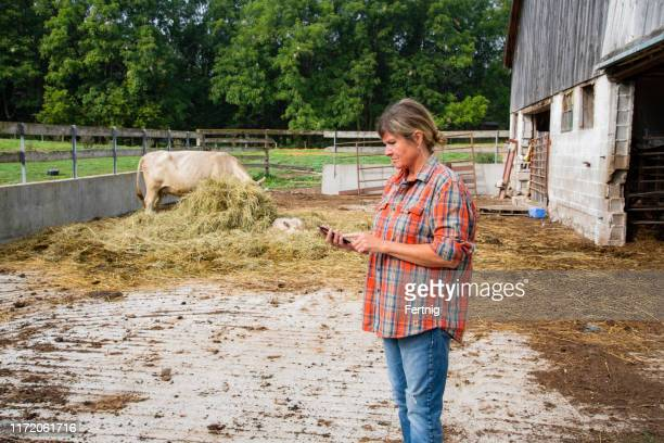 a female beef farmer using a cell phone inside a cattle pen - female animal stock pictures, royalty-free photos & images