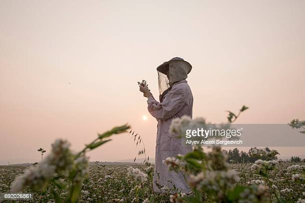 Female beekeeper inspecting plant in flower field at dusk, Ural, Russia