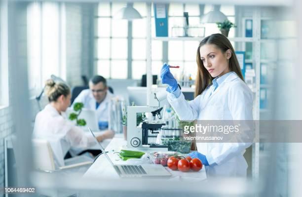 feminino biólogo analisando tomates em laboratório - biologia - fotografias e filmes do acervo