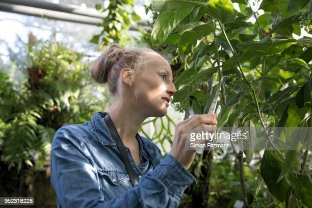 female biologist examining plant with tweezers in botanical garden - botanischer garten stock-fotos und bilder