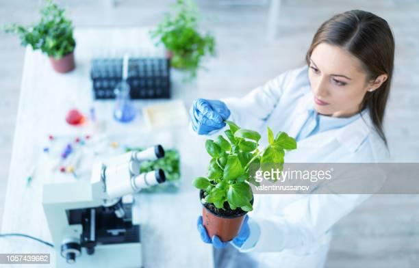 weibliche biologin hält eine pflanze im labor - speisen und getränke stock-fotos und bilder