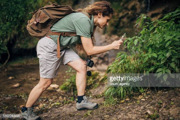 female biologist using magnifying glass in nature - south_agency stock pictures, royalty-free photos & images