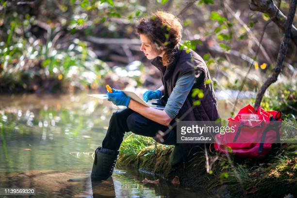 female biology researcher working in nature - environmentalist stock pictures, royalty-free photos & images