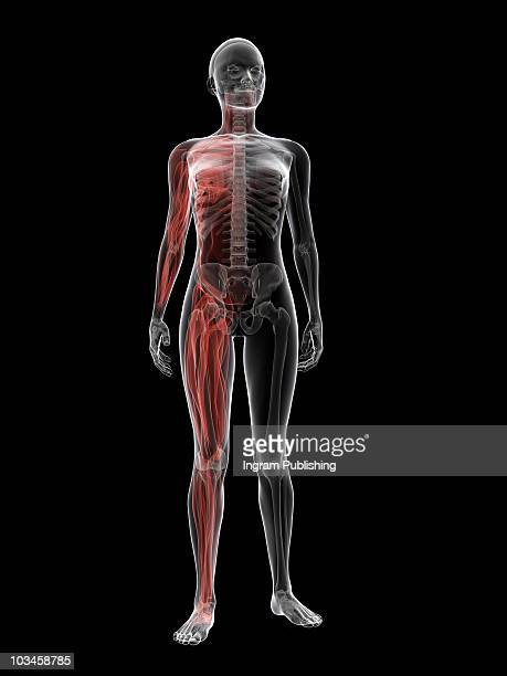 female body - autopsy stock pictures, royalty-free photos & images