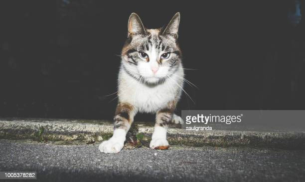 A female cat in the night looking at camera