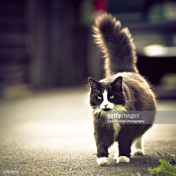 female cat - mclean virginia stock pictures, royalty-free photos & images