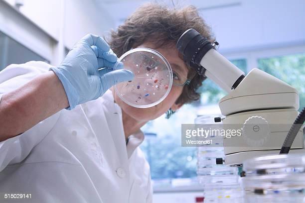 Female chemist looking at petri dish in laboratory