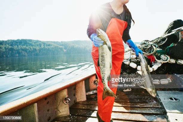 female crew member of fishing boat carrying salmon to hold of boat - salmon seafood stock pictures, royalty-free photos & images