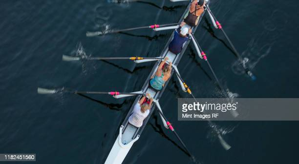 female crew racers rowing, high angle view, lake union, seattle, washington, usa. - sportmannschaft stock-fotos und bilder