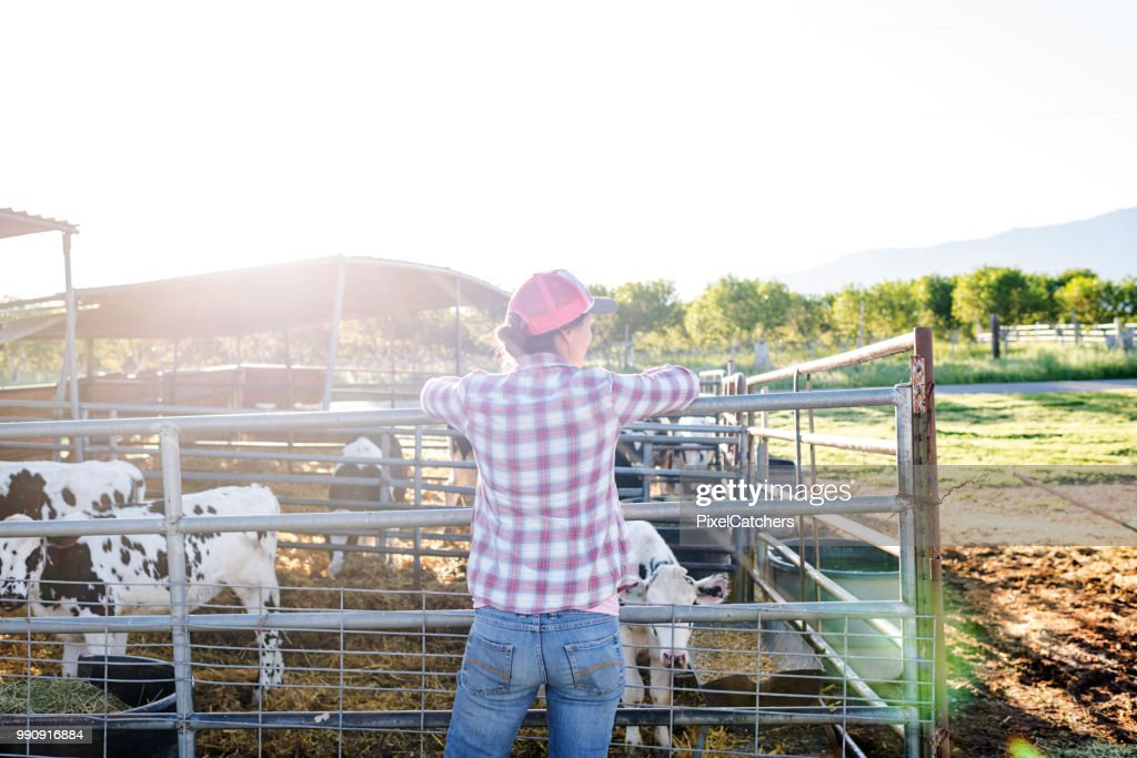 Female dairy farmer leans on fence with young calves in pen : Stock Photo