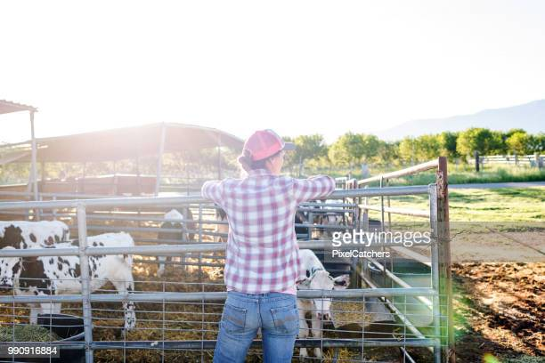 female dairy farmer leans on fence with young calves in pen - dairy farm stock pictures, royalty-free photos & images