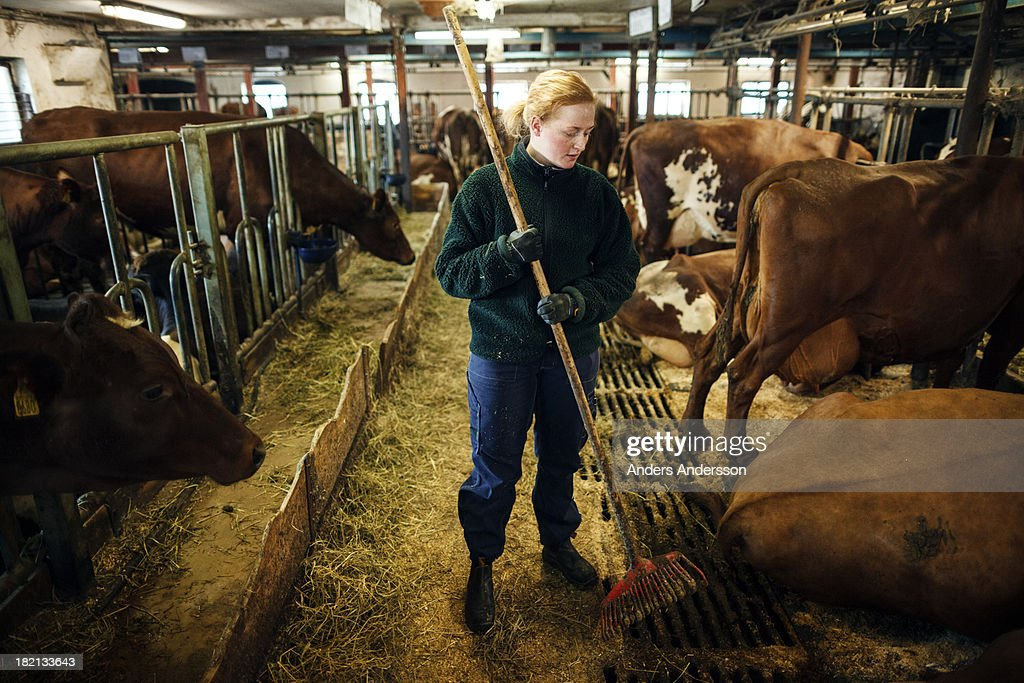Female dairy farmer : Stock Photo