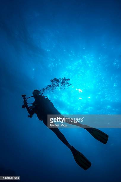 female diver - palau, micronesia - pacific ocean stock photos and pictures