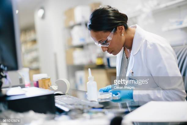 female doctor examining petri dish at desk in medical room - medicinsk forskning bildbanksfoton och bilder