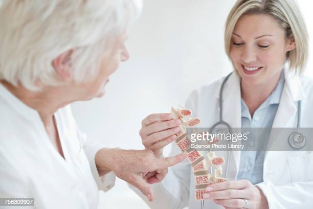 female doctor holding anatomical model - bones stock photos and pictures