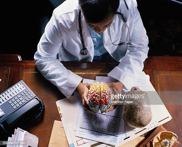 Female doctor holding model of brain, elevated view