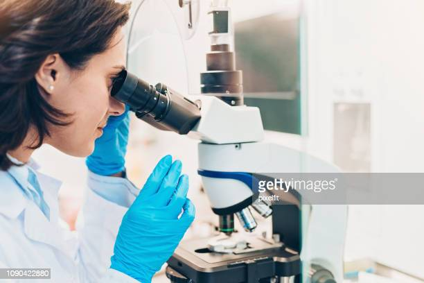 female doctor looking through a microscope - human fertility stock pictures, royalty-free photos & images