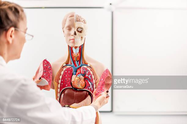 Female Doctor teaching using Anatomical model