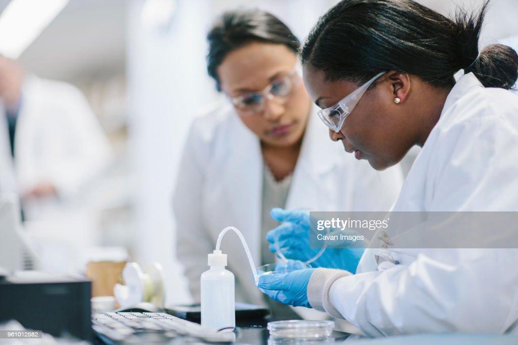 Female doctors examining petri dish in laboratory : Stock Photo