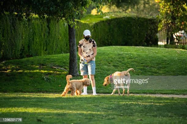公園で2匹の犬とマスクを持つ雌犬の犬ウォーカー - training grounds ストックフォトと画像