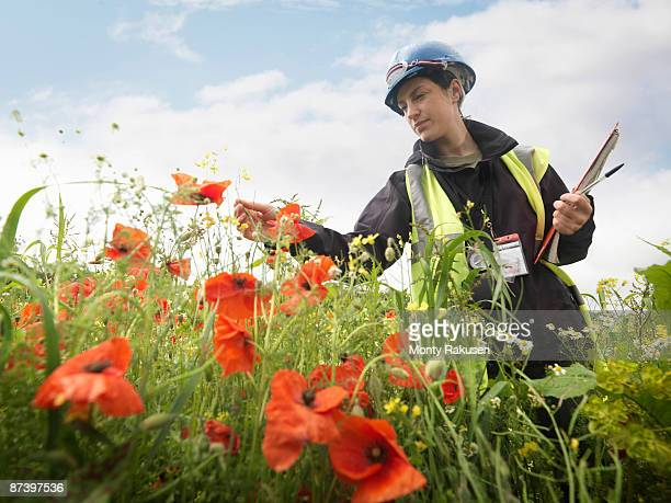 Female Ecologist With Poppies