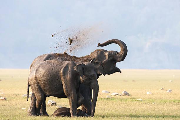 Female Elephants With Calf. Wall Art