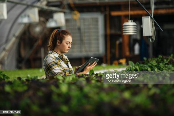 female farm worker using digital tablet in greenhouse - farmer stock pictures, royalty-free photos & images