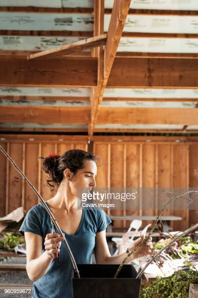 Female farmer arranging flowers in wooden shade