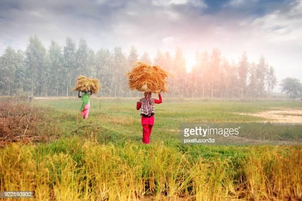Female farmer carrying grass bundle on head